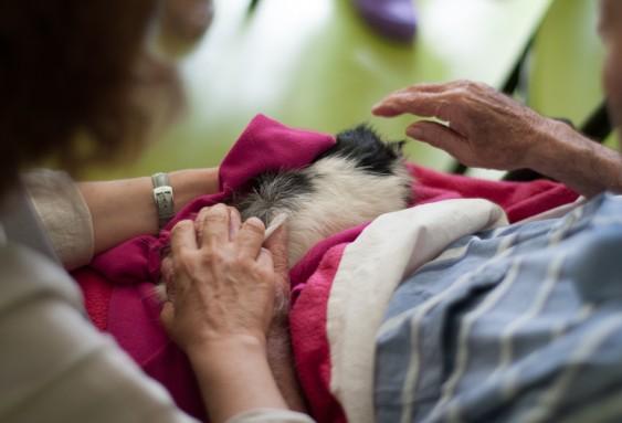 Médiation animale en EHPAD : favoriser l'expression des ressentis
